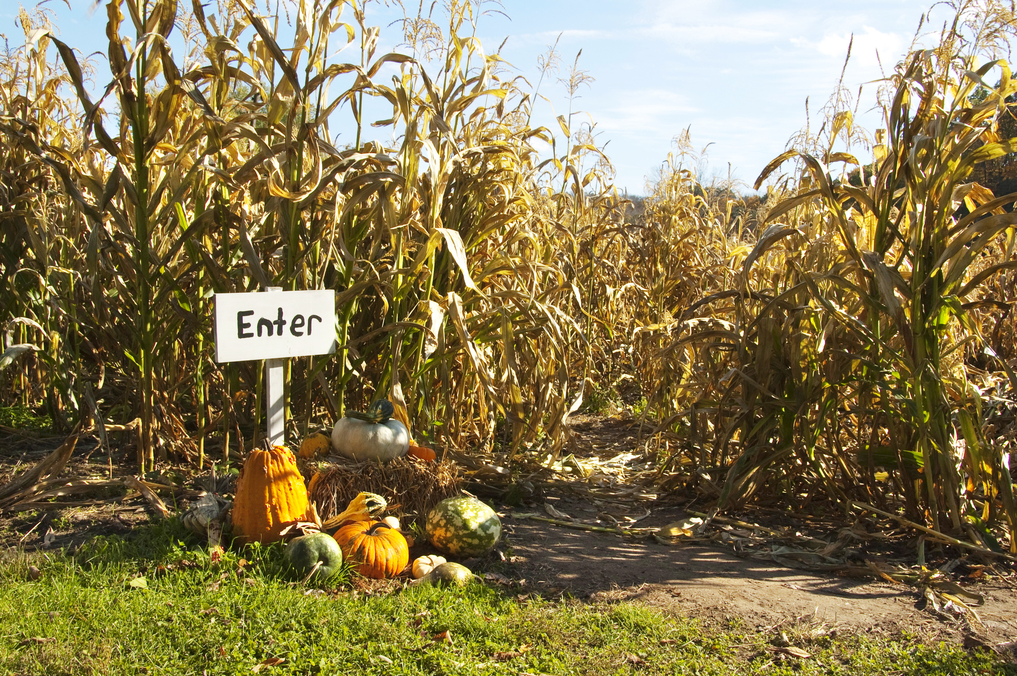 Five Corn Mazes in Northern Illinois and Southern Wisconsin to Visit this Fall