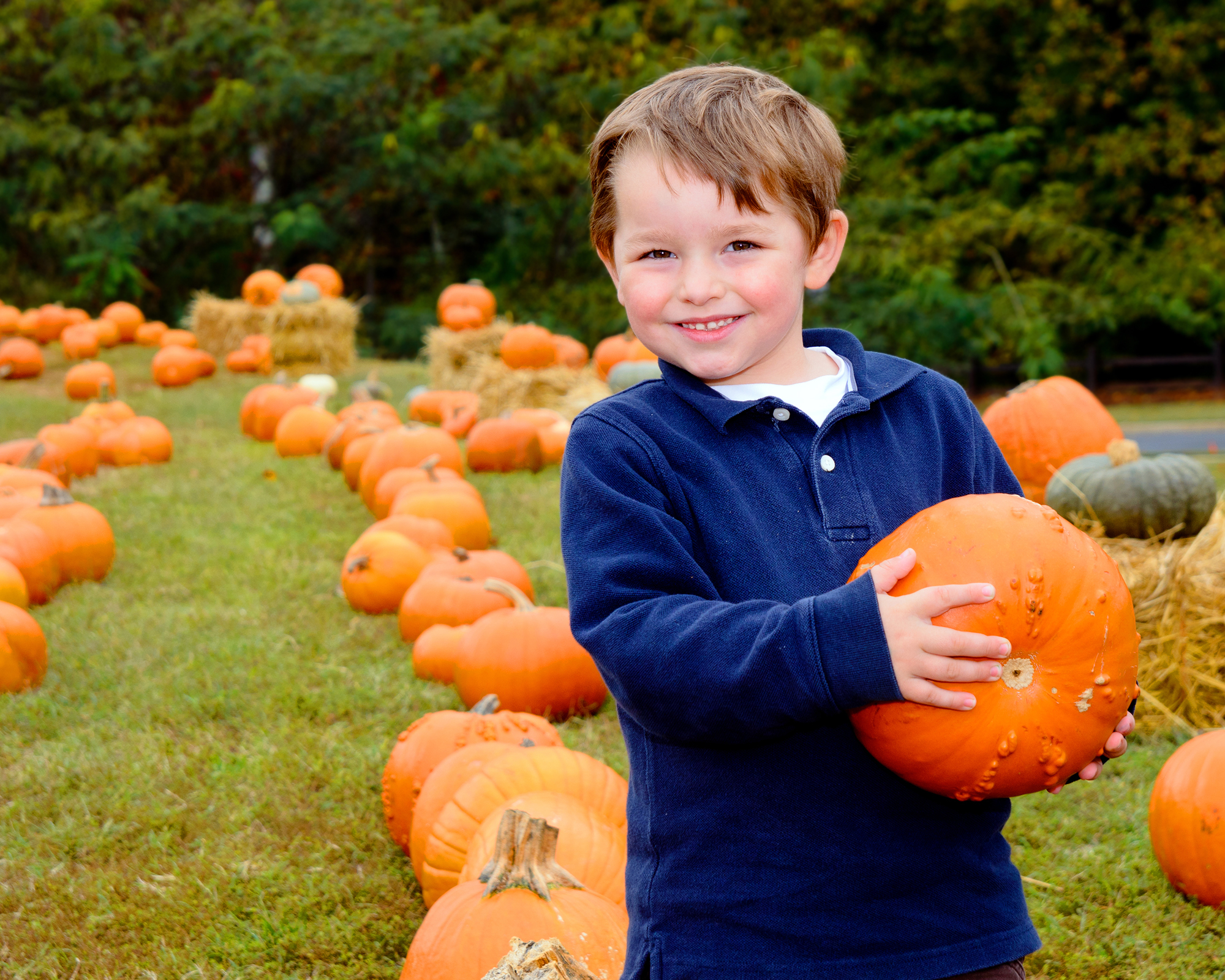 Pick the Perfect Pumpkin at These Stateline Pumpkin Patches