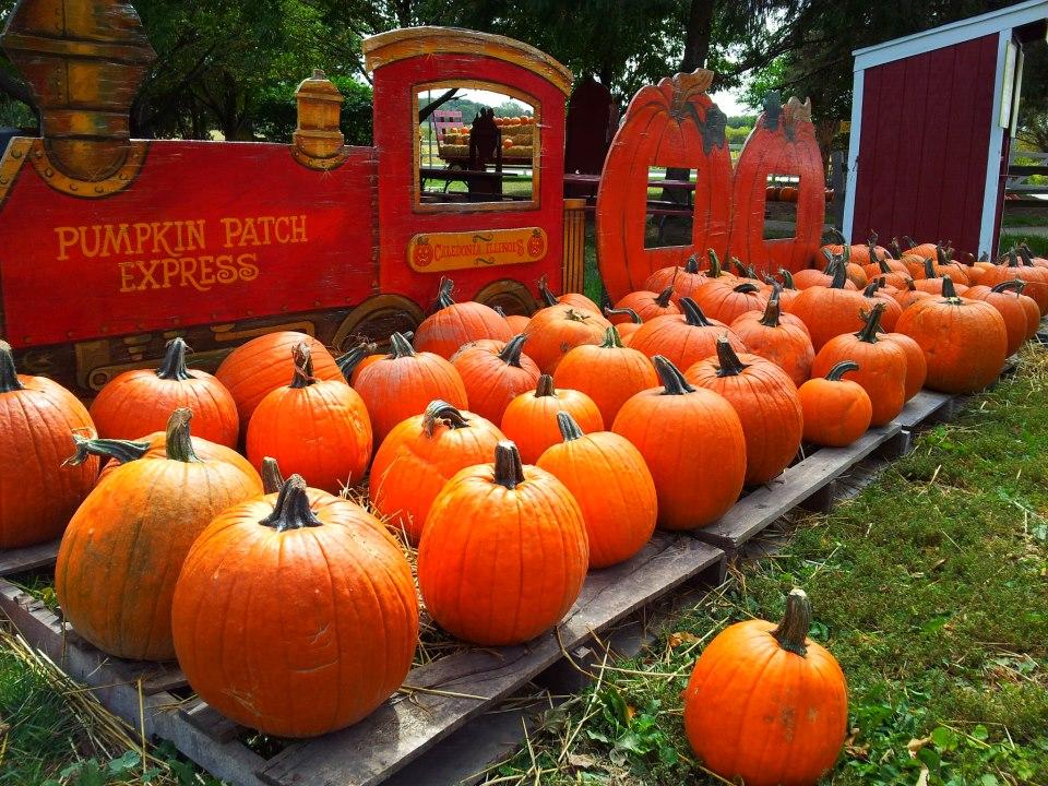 Lindberg Pumpkin Patch Caledonia, IL