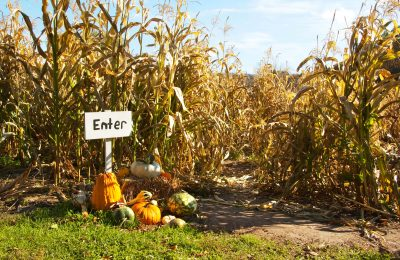 Five Corn Mazes in the Stateline to Visit This Fall