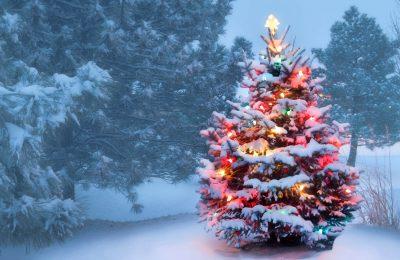 Christmas Tree Lightings in Rockford 2019