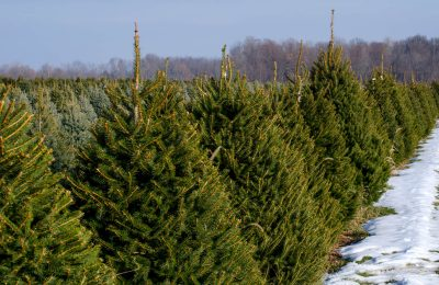 Christmas Tree Farms and Stands in Rockford, Illinois