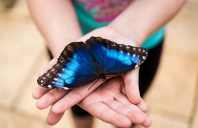 Butterflies are Back in Rockford This Spring
