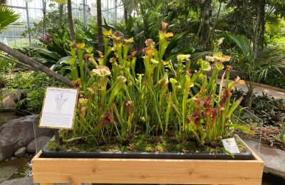 Visit the Savage Gardens Exhibit This Summer and Fall